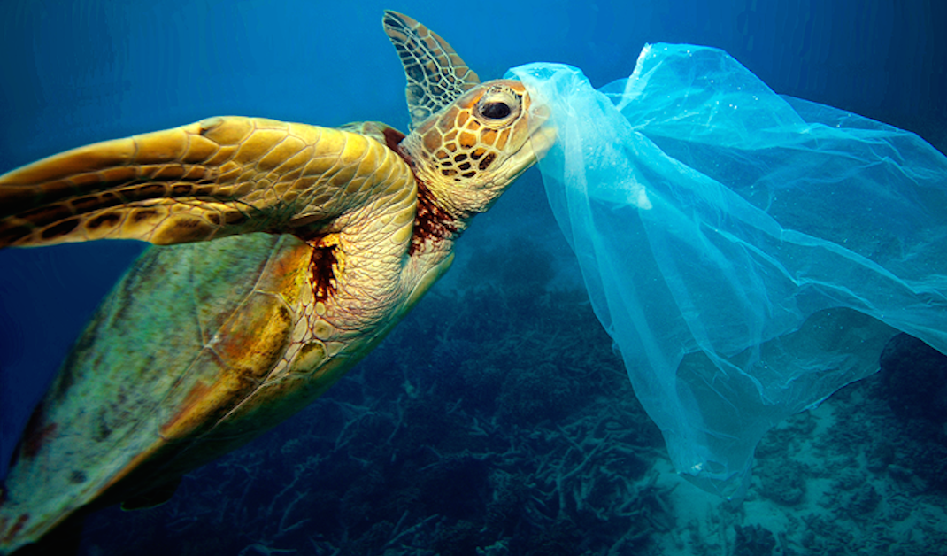 Finally Kenya Effects Ban On Plastic Bags The Green Times