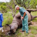 The rhino killing fields of KwaZulu-Natal
