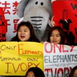 Hong Kong bans domestic sale of ivory