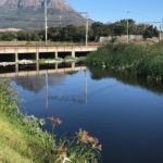 Urban environment to blame for Cape Town river pollution