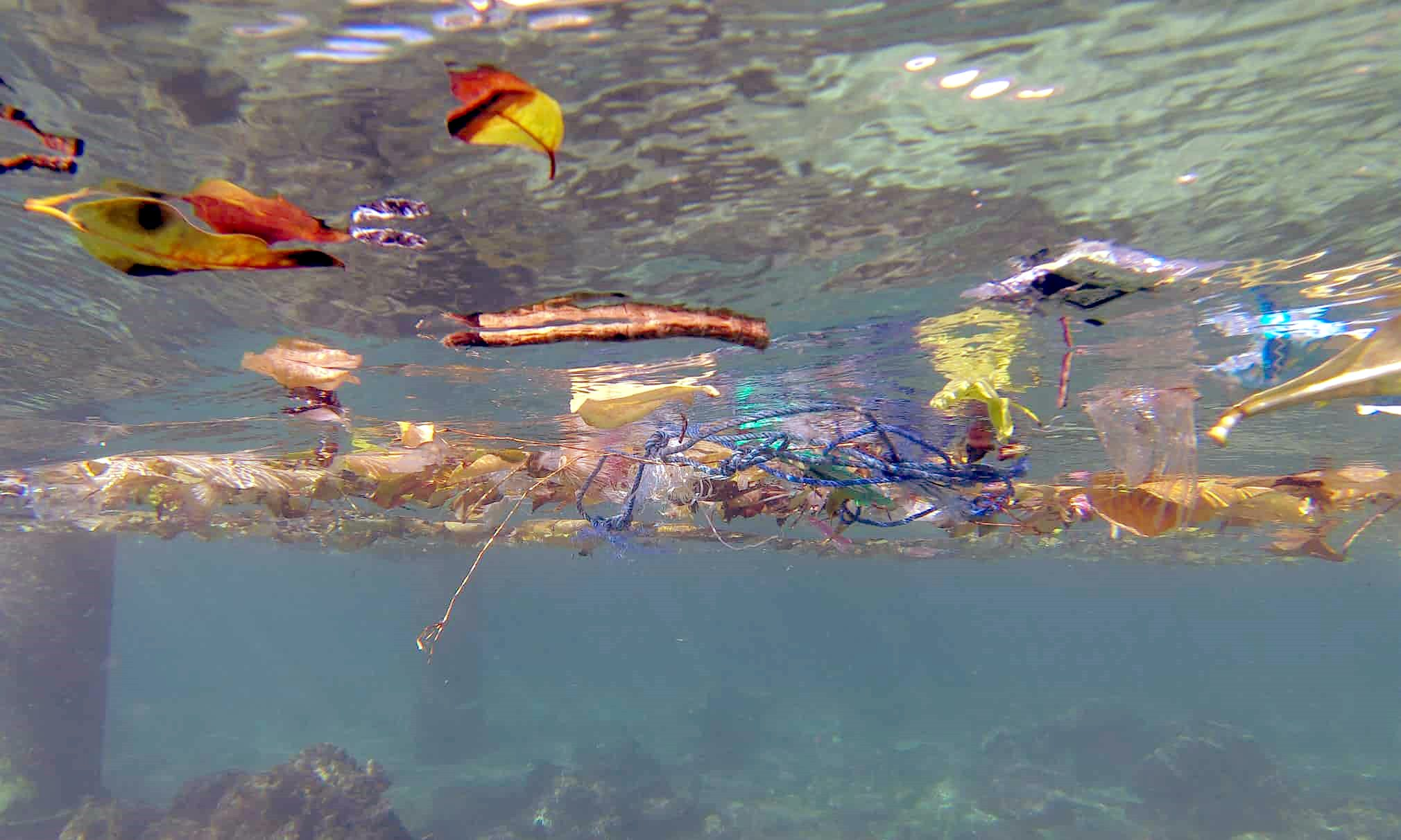 Plastic pollution epidemic attacking australia 39 s for Flying fish company