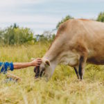 New Zealander attempts an ethical, sustainable dairy farm