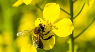 Europe poised for total ban on bee-harming pesticides