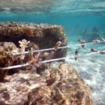 Coral gardening initiative launched at Fiji resort