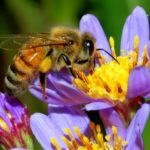 Beekeepers file legal complaint over glyphosate in honey