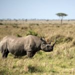 New report finds inadequate protection for the well-being of SA wildlife