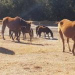 NSPCA removes 69 horses from the SANDF