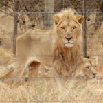 SA law failing wildlife held in captivity