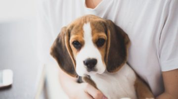 Japanese government stops testing pesticides on dogs