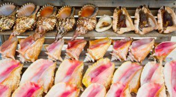 Illegal seashell trafficking is killing protected marine life