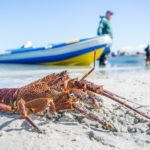 Is the Marine Living Resources Act being enforced in South Africa?