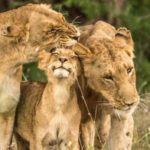 Parliament concerned about trophy hunting in the Greater Kruger area