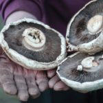 Could mushrooms solve the war on plastic?