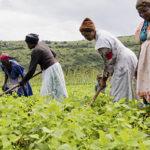 Agroecology: smallholder farmers mend a broken food system