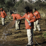 Environmental service program offers youth employment and training