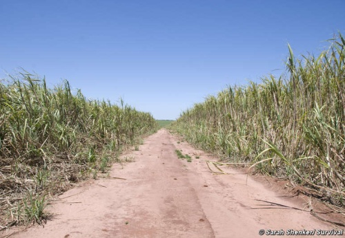 guarani brazil shell ethanol eco green field