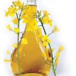 canola-oil-controversy