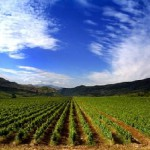 africas-sustainable-farming-intensifies