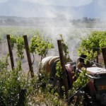 kwv-to-clean-up-their-vineyards