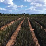 biofuels-for-europe-driving-land-grabbing-in-africa