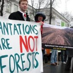 international-day-against-monoculture-trees