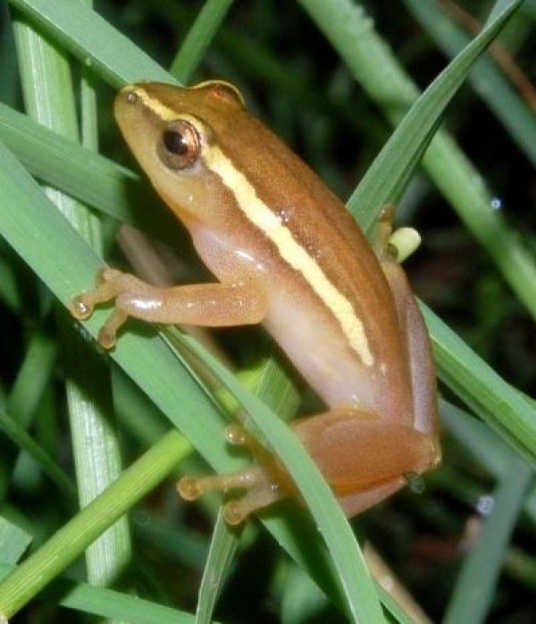 ensuring-the-future-of-sas-frogs
