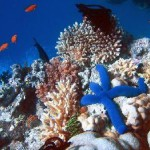 act-now-to-protect-disappearing-corals