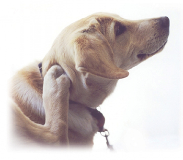 solving-your-pets-skin-allergies