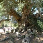 a-tree-seeker-in-italy