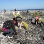 robben-island-beaches-enjoy-green-sweep