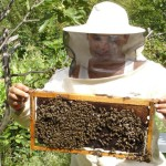 beekeeper getting started eco protect honey2