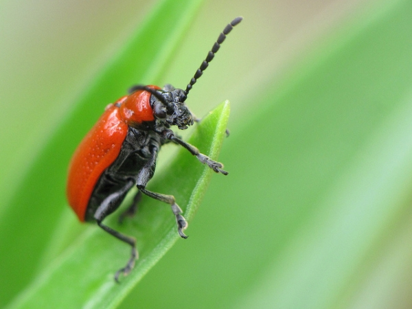 alien-bugs-are-more-harmful-than-they-seem
