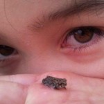 lets-keep-the-toadlets-alive