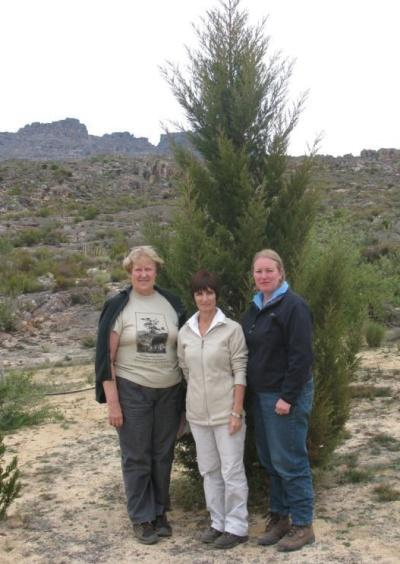 kloof reserve cedar tree endangered eco2