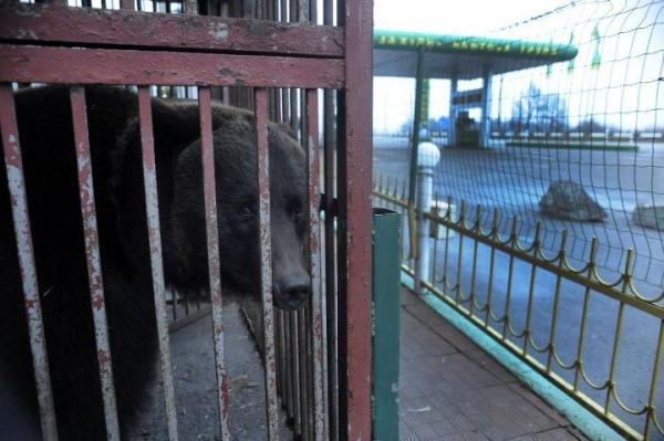 new-hope-for-ukraines-brown-bears