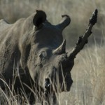 suspected-rhino-poachers-killed-and-3-more-carcasses-found