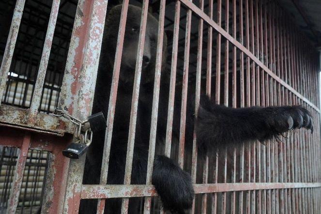 Four Paws Brown Bear Rescue Rehab -2