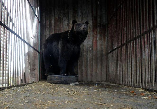 Four Paws Brown Bear Rescue Rehab -3