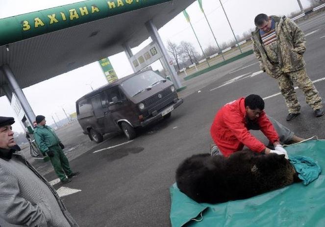 Four Paws Brown Bear Rescue Rehab -4