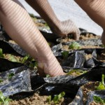 communities-and-volunteers-benefit-from-building-sustainability