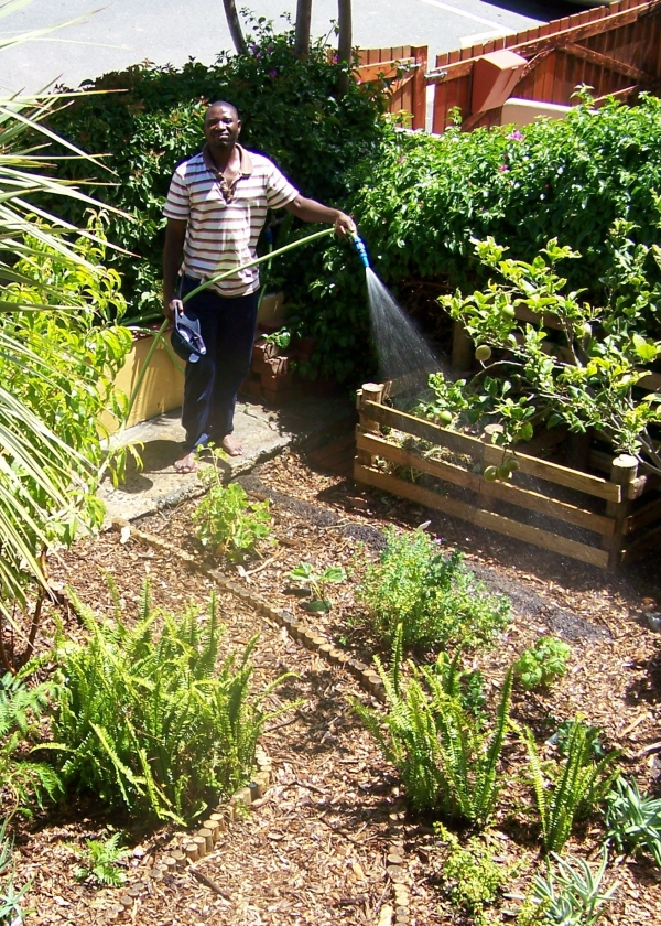 the-stoep-harvest-part-7-intelligent-watering