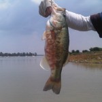 local-fish-threatend-by-disease