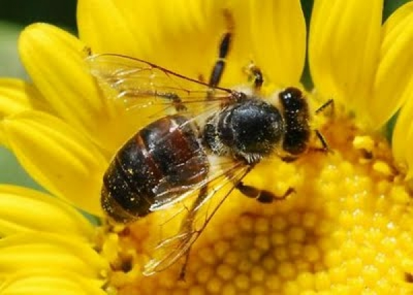 5-step-guide-to-help-farmers-protect-pollinators