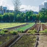 cubas-organic-food-revolution-flourishing