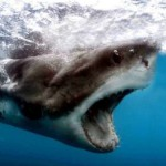 shark-chumming-permit-cancelled-after-attack