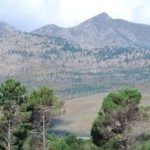 """no""-to-forestry-in-fynbos-areas"