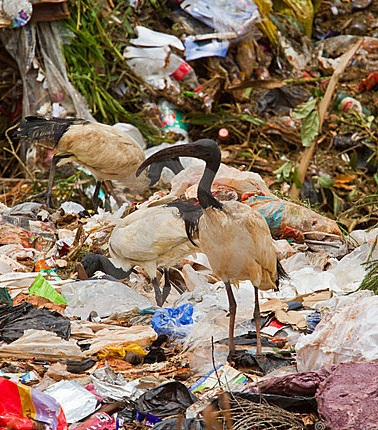 rubbish-litter-bird-food