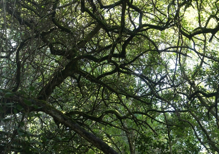a towering canopy