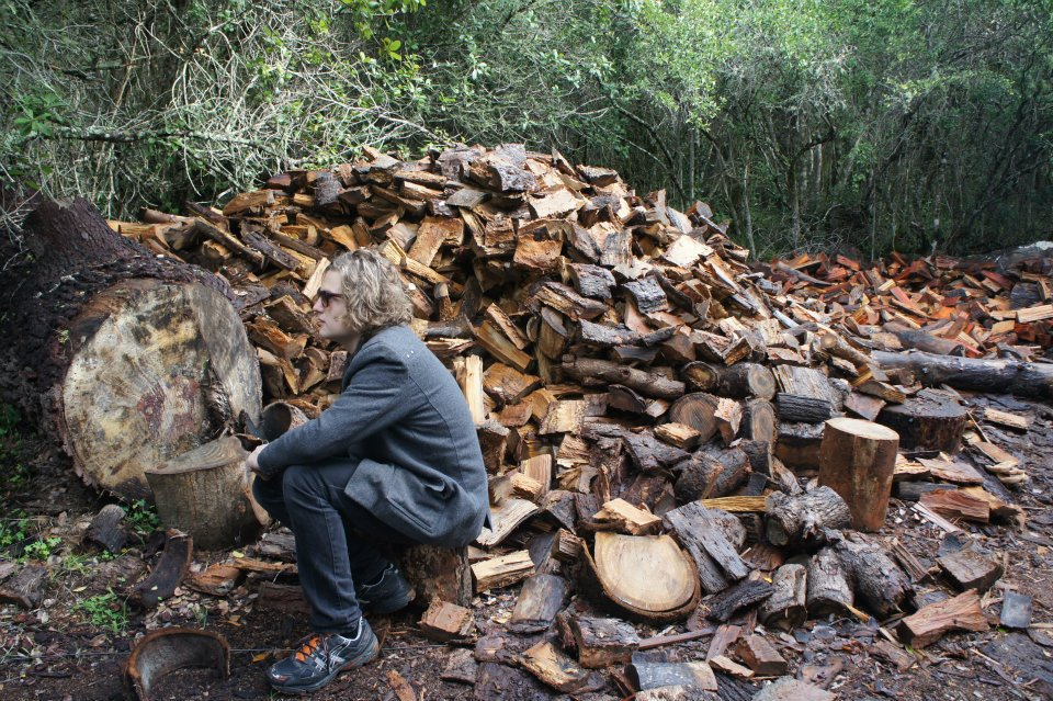 l-alien trees become firewood