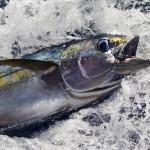 rainbow-warrior-in-key-tuna-hub-mauritius